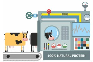 Производство протеина от коровы до прилавка
